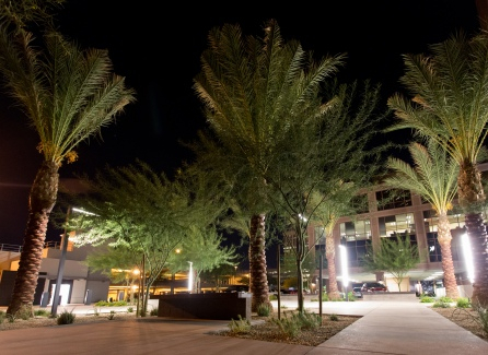 Date Palms and Palo Brea trees lit up at night.